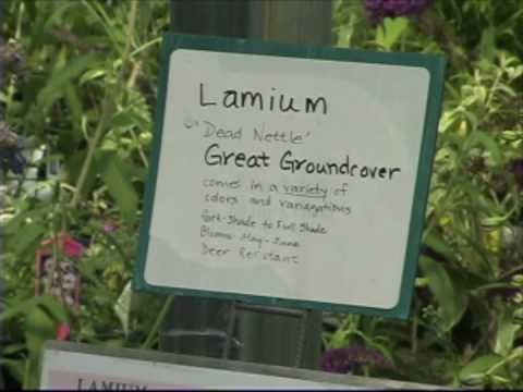 Read Labels at the Garden Center