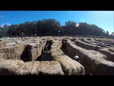 Pumpkin Festival @ Half Moon Bay and Hay Maze @ Aratas Farm
