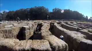 Pumpkin Festival @ Half Moon Bay And Hay Maze @ Aratas Farm