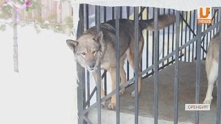 UTV. Когда в Оренбурге появится приют для бездомных животных?