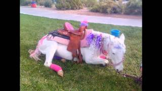 Pony Party Time  Video