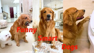 Funny Dogs | Smart Dogs of TikTok Compilation | Tik Tok | Douyin | Kuaishou | China