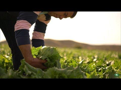 Anecoop y sus socios: homenaje a los agricultores