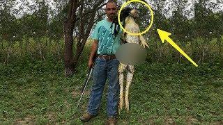 Pria tak sengaja tangkap Makhluk Aneh di hutan, Saat diperiksa dia Terkejut!! Ternyata ini..