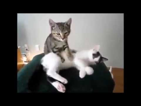Funny Cats  Funny Cat Videos Better Than Funny Pranks  Smile!