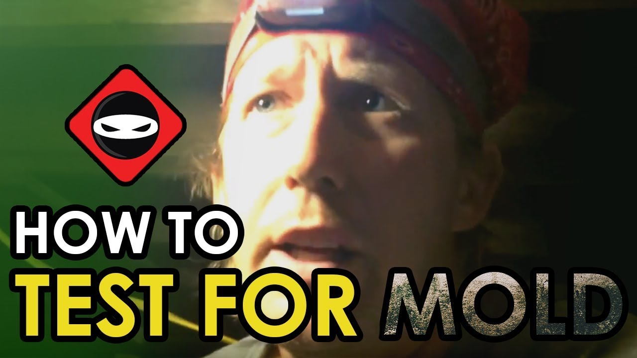 Crawl space mold removal how to test if mold is dead in crawl crawl space mold removal how to test if mold is dead in crawl space solutioingenieria Gallery