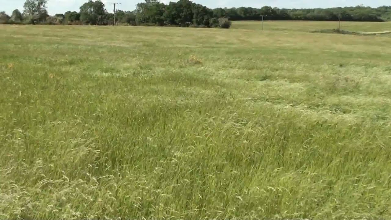 Waves of wind rolling through fields of long grass in for Like long grasses