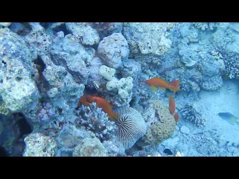 Travel Video - Scuba Diving in the Red Sea off Aqaba, Jordan