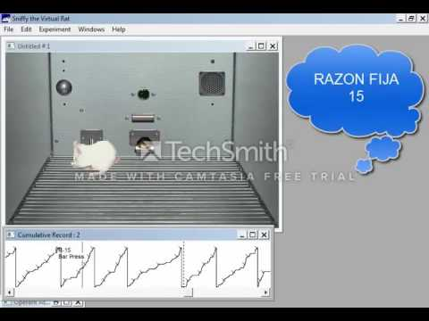 a study of classical conditioning in sniffy the virtual rat We report on the use of our sniffy program to teach operant conditioning to 900  introductory psychology students  behaviors one would observe in a real rat  learning to oper- ate in the  classical conditioning offers a set of techniques for .