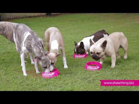 Shawthing Whippets & French Bulldogs