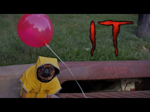 It (2017) Teaser Trailer but with a Dog