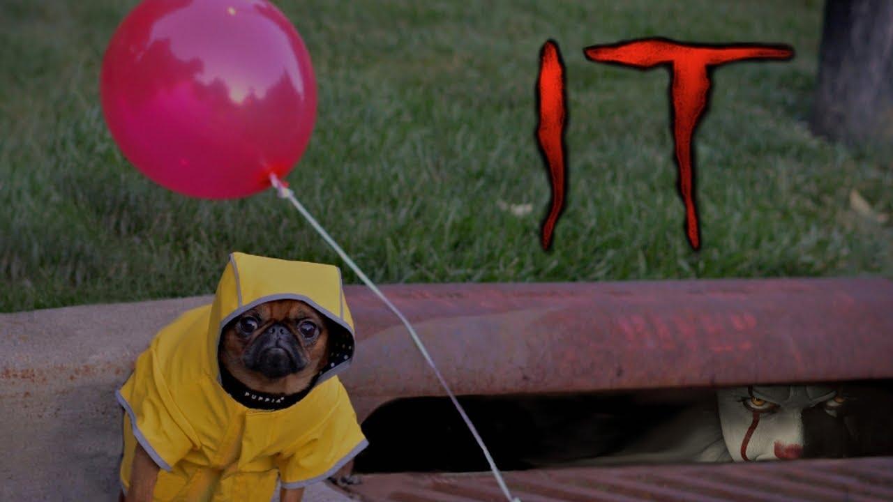 Georgie The Dog Uk