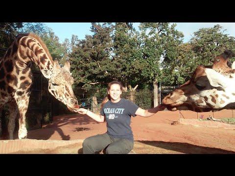 Mara Eisenbarth Otterbein University Study Abroad Perth Zoo Internship Western Australia