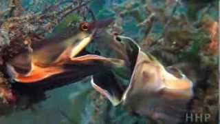 beautiful under water life.flv