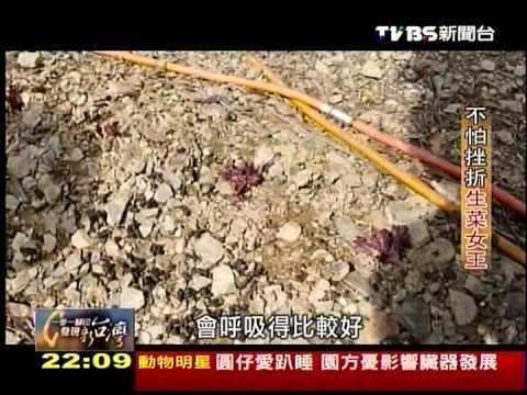 20130901 TVBS 一步一腳印 發現新台灣   不怕挫折生菜女王