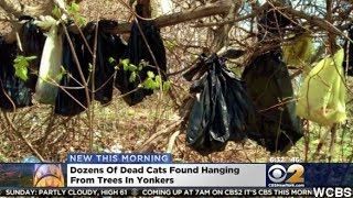 Dead Cats Found In Bags Hanging From Trees In NYC Suburb