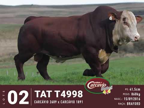 LOTE 02 - TAT T4998