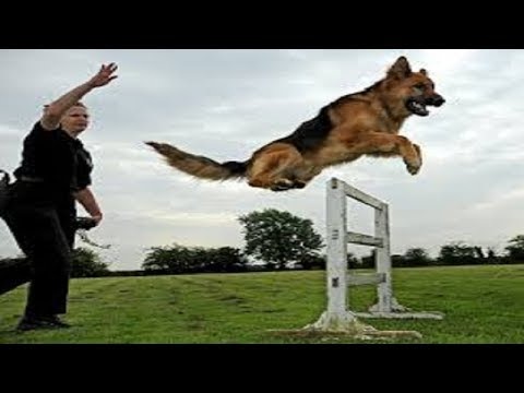 dog-training-:-secrets-to-dog-training:-stop-your-dog's-behavior-problems!