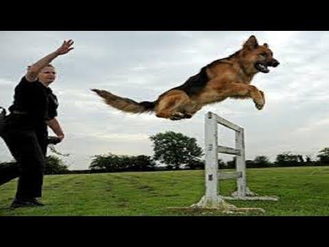 dog-training-:-secrets-to-dog-training:-stop-your-dog's-behavior-problems!