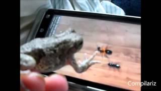 Коты и собаки играют на планшете КЛАССНАЯ ПОДБОРКА ПРИКОЛОВ ПРО ЖИВОТНЫХ