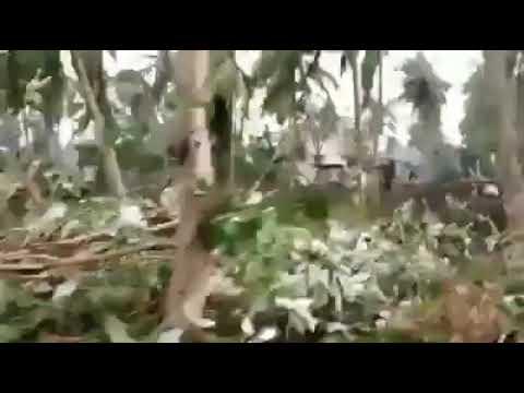 கஜா புயல் : புதுக்கோட்டை