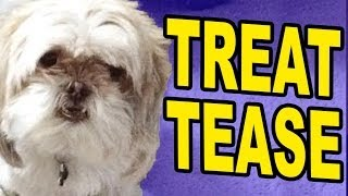 DOG TREAT PRANK