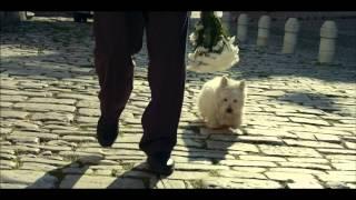 Трогательная Реклама Cesar-Love Them Back 2013(Платите им любовью)