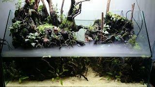 "Set-Up Paludarium ""Tropical River"""