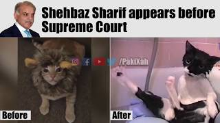 Shehbaz Sharif's appearance before Supreme Court explained   PakiXah