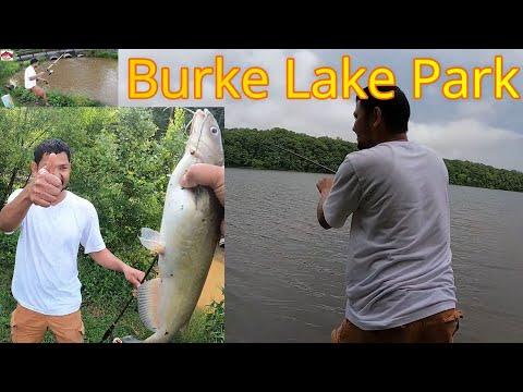 Fishing In Burke Lake Park Fairfax VA USA   Channel Catfish In Burke Lake Park