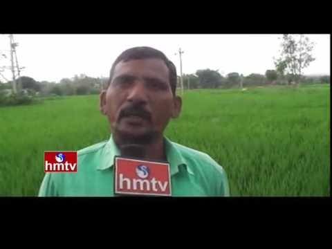 Curry Leaf Farming - Techniques to yield Srivari & Mulberry Cultivation | Nela Talli | HMTV