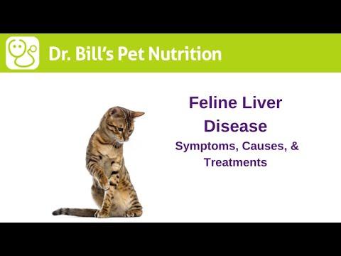 Feline Liver Disease | Symptoms, Causes, & Treatments | Dr. Bill's Pet Nutrition