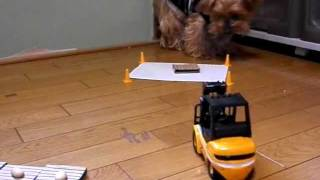 we played with a rc forklift. I asked my dog to eat the snack aroun...