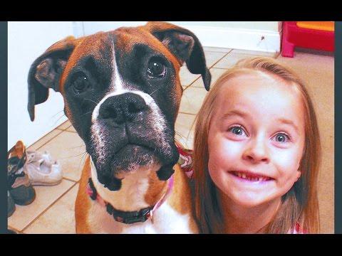 BOXER DOG TRICKS 'Adelyn' showing off
