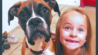My Boxer Dog 'adelyn' Showing Off