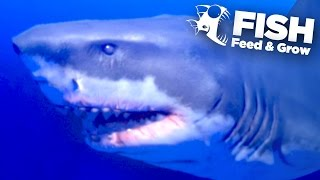 NEW KING GREAT WHITE SHARK!!! - Feed And Grow | Ep5