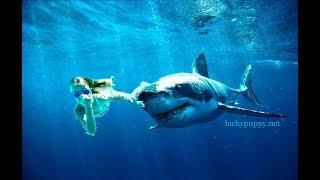 SHARK WEEK IS COMING