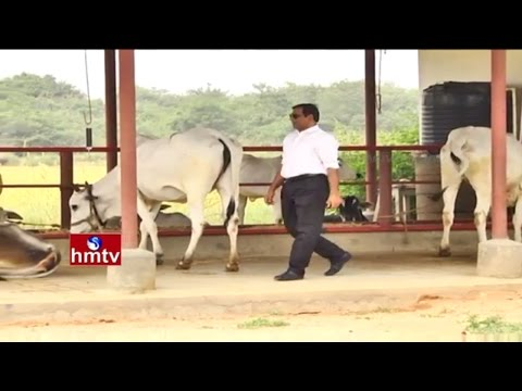 Mahabubnagar Ideal Farmer Tips on Dairy Farm Use in Agriculture | Nela Talli | HMTV