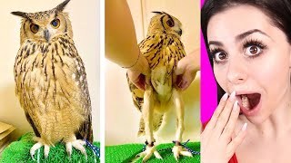 AMAZING THINGS You Have Never Seen Before !