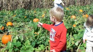Paige and Michael picking out pumpkins - October 3, 2010 - Donaldson Farm - Hackettstown.mov