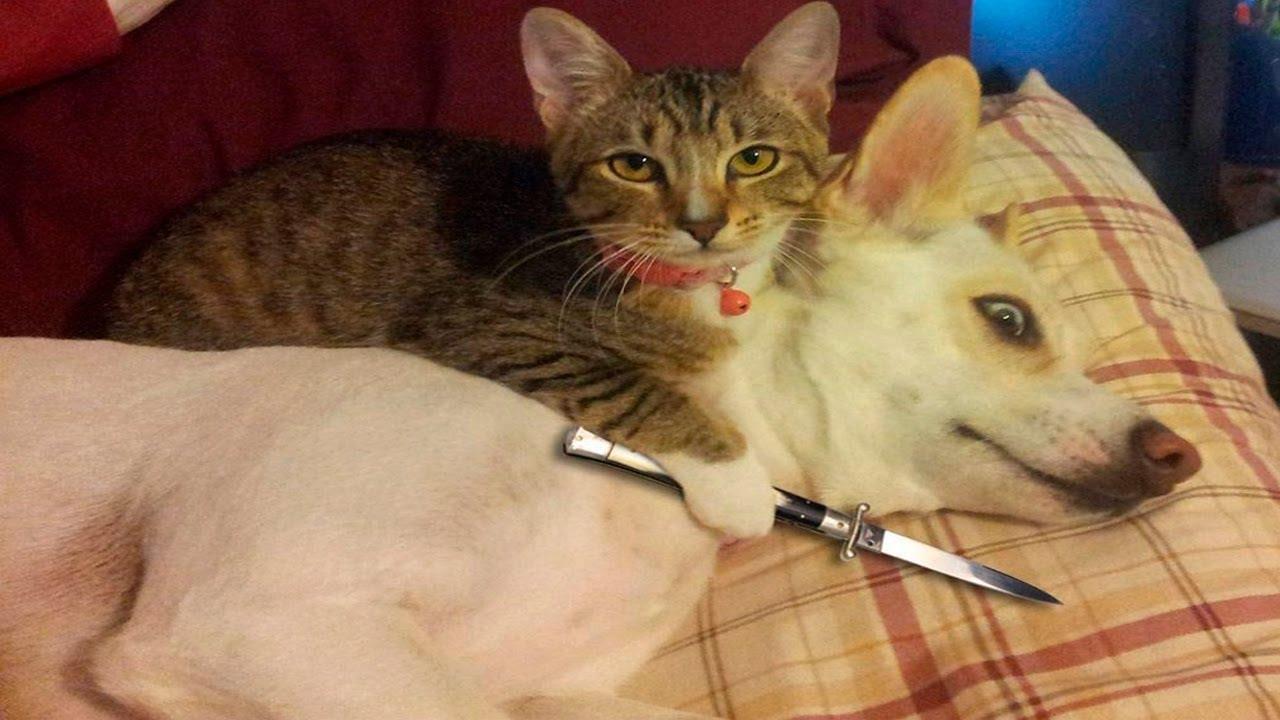Dog Vs Cat Compilation