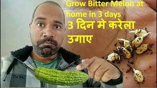 How to grow bitter guard/melon  in pot with easy steps करेला उगाने की विधी