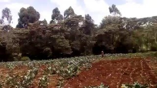 Video of Tigoni land for sale in limuru Kenya