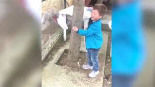 Risa 2018 Videos The Best Funny Videos with animals