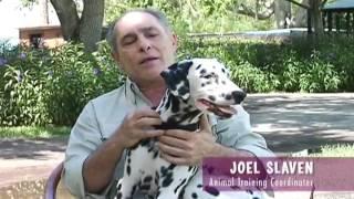 Rascal Bio - 101 Dalmatians The Musical