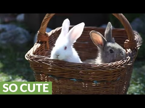 Easter Bunny Babies In A Basket