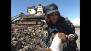 брошенные при наводнении собаки КП