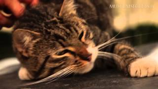 """Resident Cats at the Hermitage on """"Museum Secrets"""" show"""