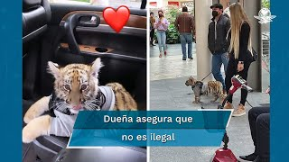 Captan a mujer paseando a un tigre en centro comercial Antara