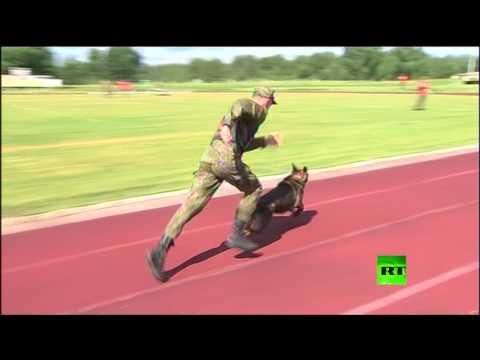 مصر تشارك بمسابقة 'الصديق الوفي ' للكلاب العسكرية